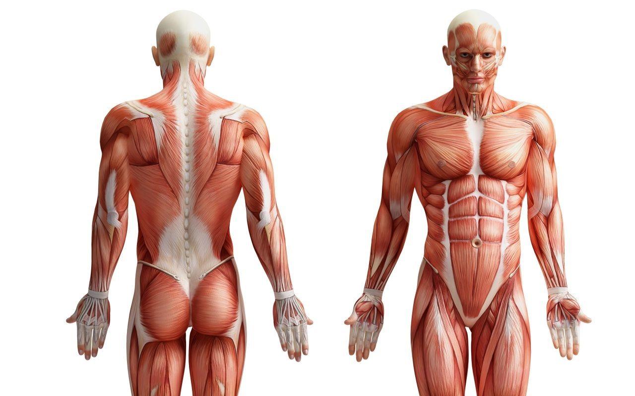 Anatomia Palpatória e Orientação Clínica